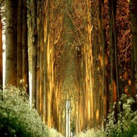 Magical Tree Tunnel, Belgium