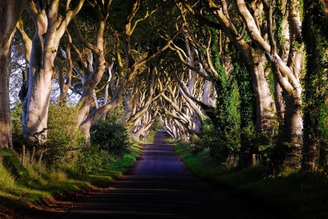 -0dark-hedges