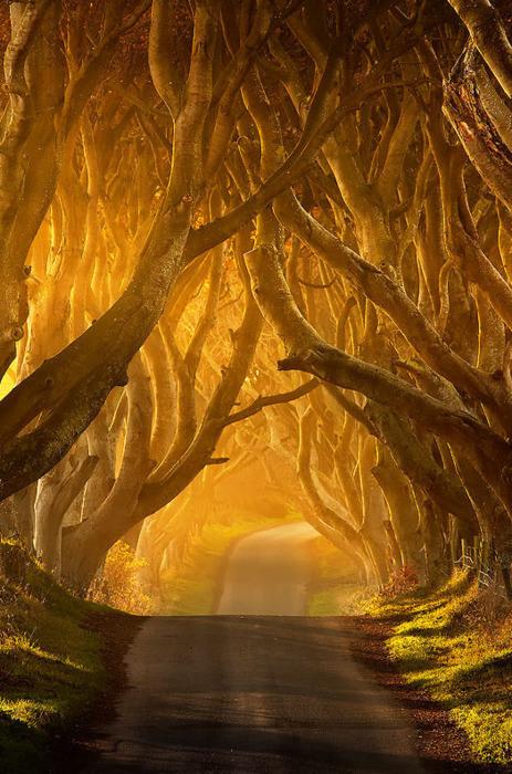 dark-hedges-antrim-ireland