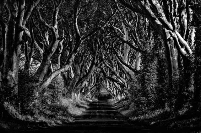 -the-dark-hedges