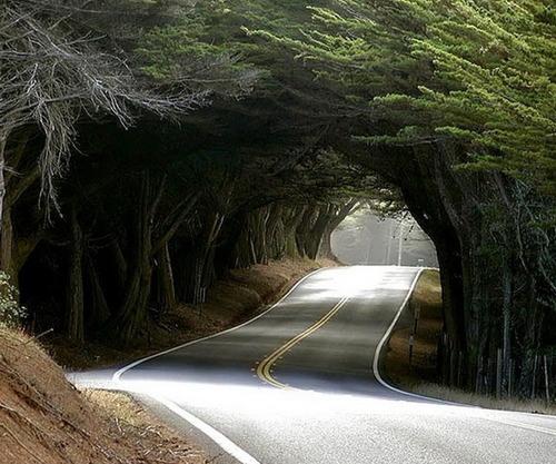-tree-tunnel