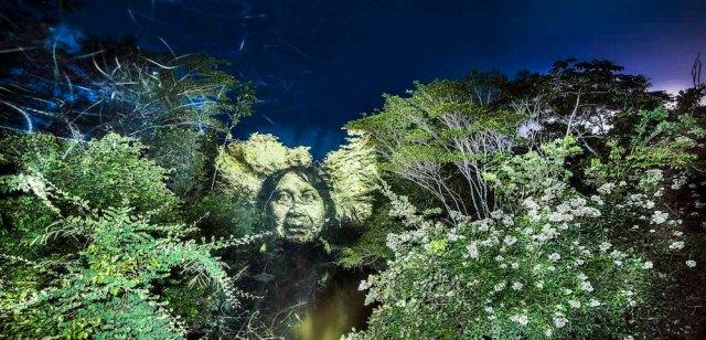 philippe-echaroux-rainforest-3