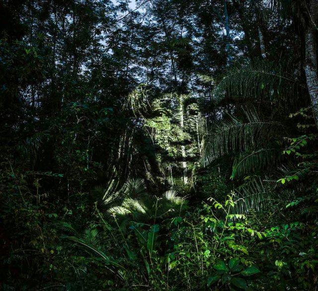 philippe-echaroux-rainforest-4